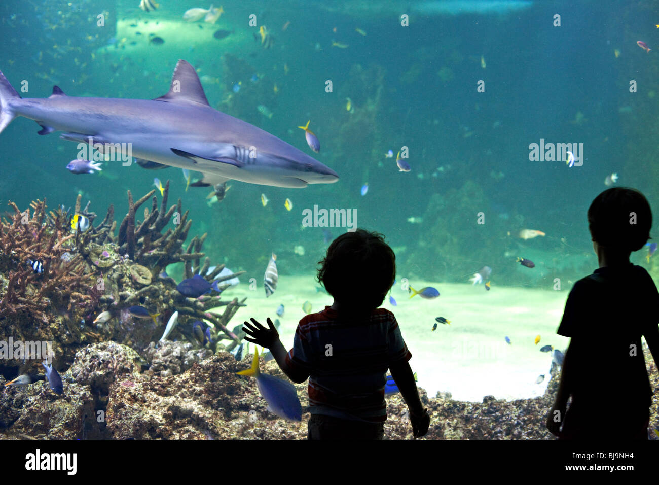 Children watching sharks in Sydney Aquarium, Australia - Stock Image