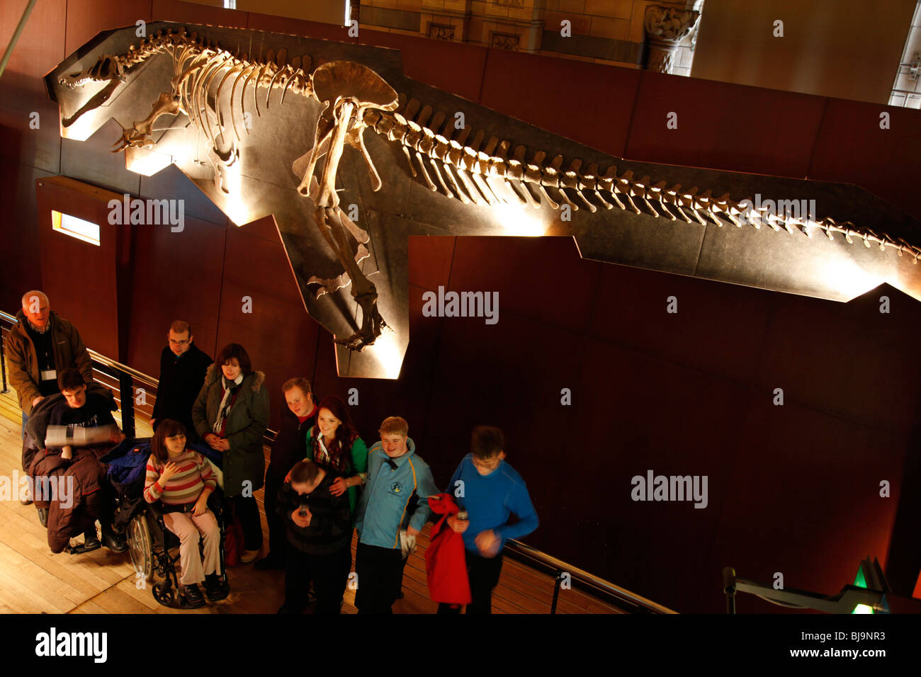 The Natural History Museum, London. Visitors in the Dinosaur gallery. - Stock Image