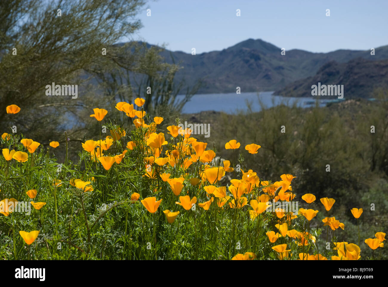 Bartlett Lake, Carefree, Arizona, USA - Stock Image
