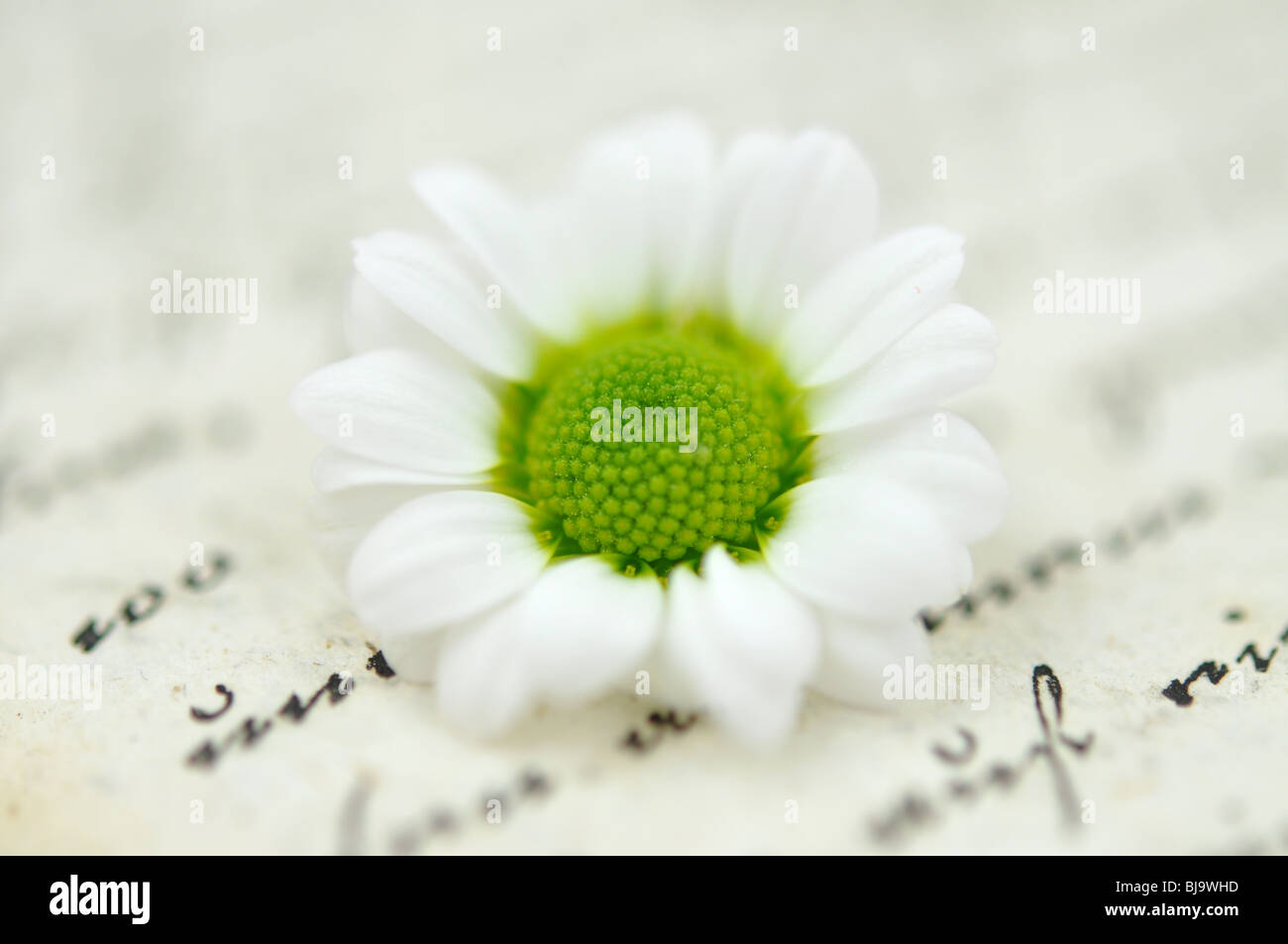 Daisy flower meaning stock photos daisy flower meaning stock tiny white daisy on a diary very shallow depth of field stock image izmirmasajfo