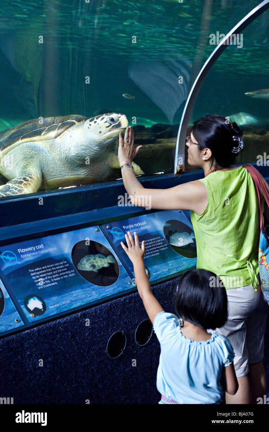 A woman watching sea turtle in Sydney Aquarium, Australia - Stock Image