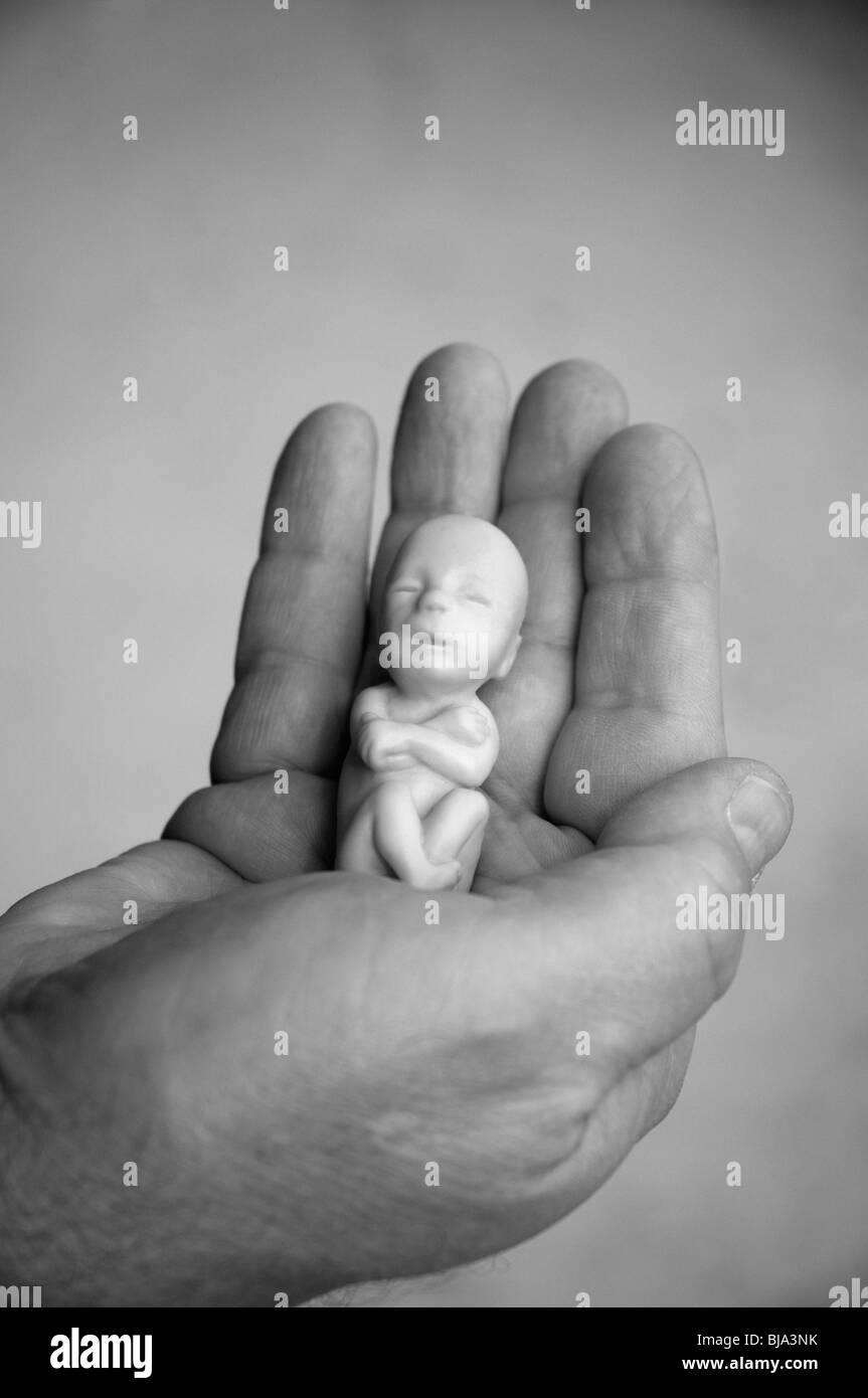 model of 12 week old fetus held in hand - Stock Image