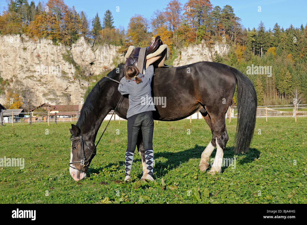 girl is saddling a horse, english style - Stock Image