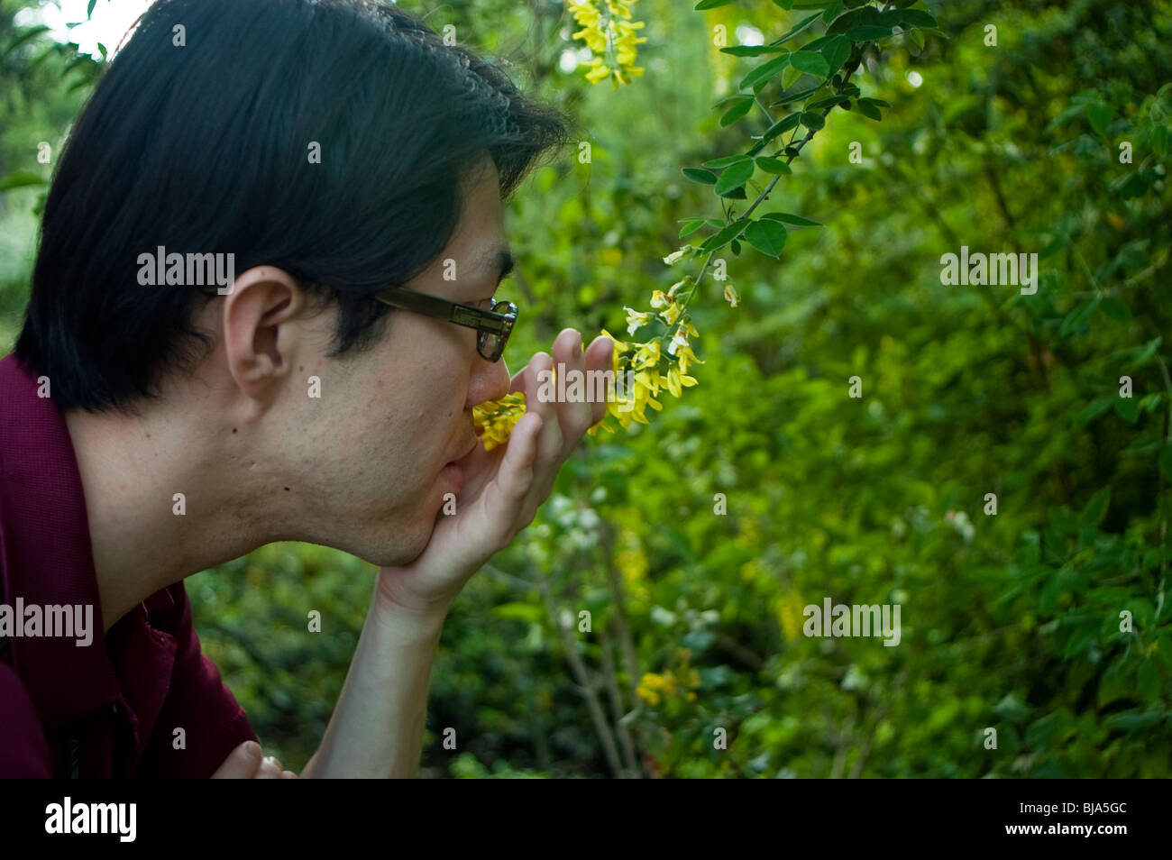 Paris, France, Public Parks, Young Man Smelling Flowers in Garden - Stock Image