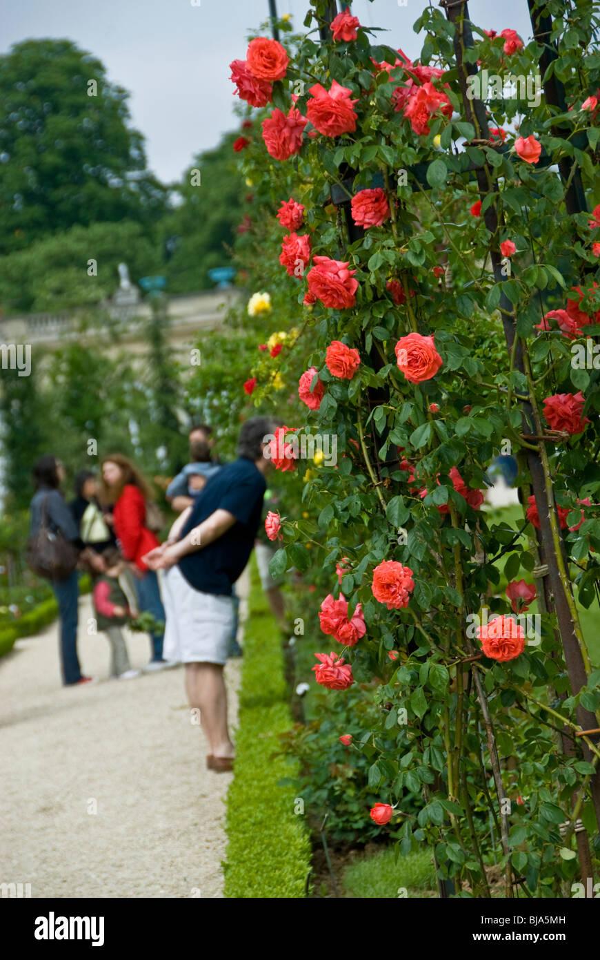 Paris, France, Public Parks, People Visiting Rose Garden in 'Bois de Boulogne' Park - Stock Image