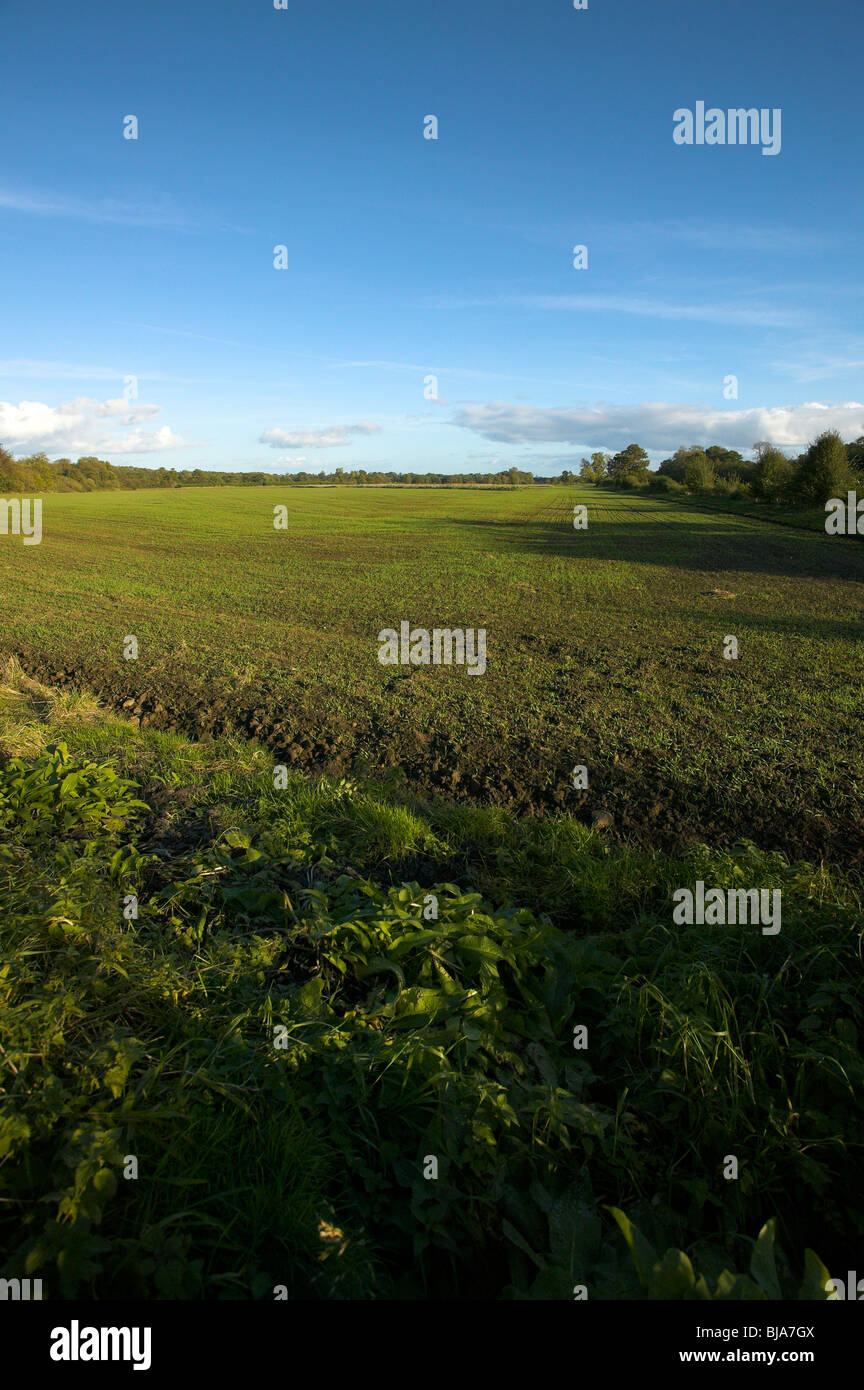 farm land in Yorkshire - Stock Image