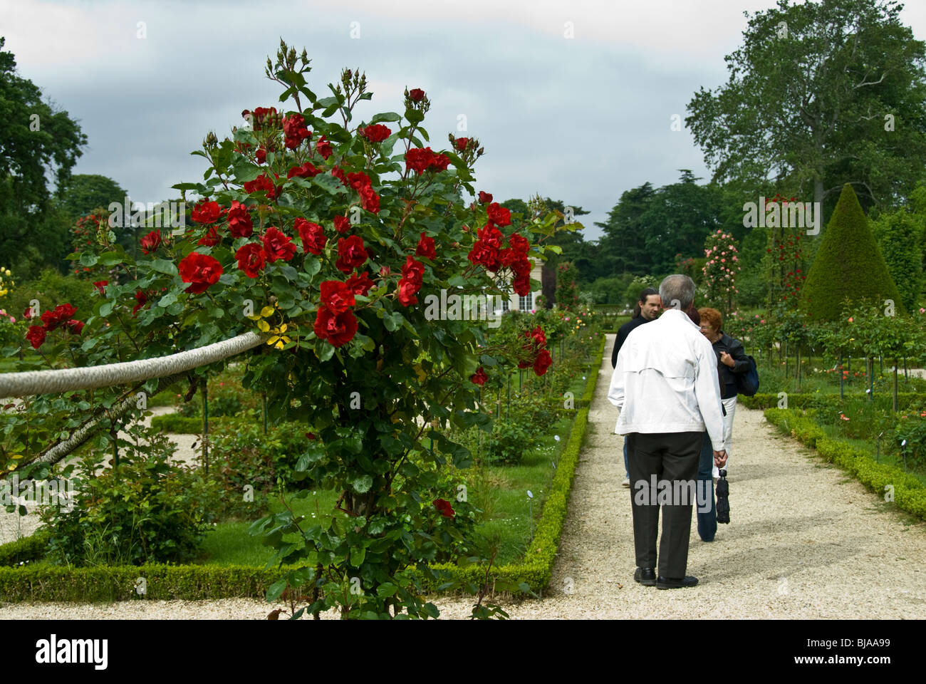 Paris, France, Public Parks, Group of People Visiting Bagatelle Rose Garden in Boulogne Park, - Stock Image
