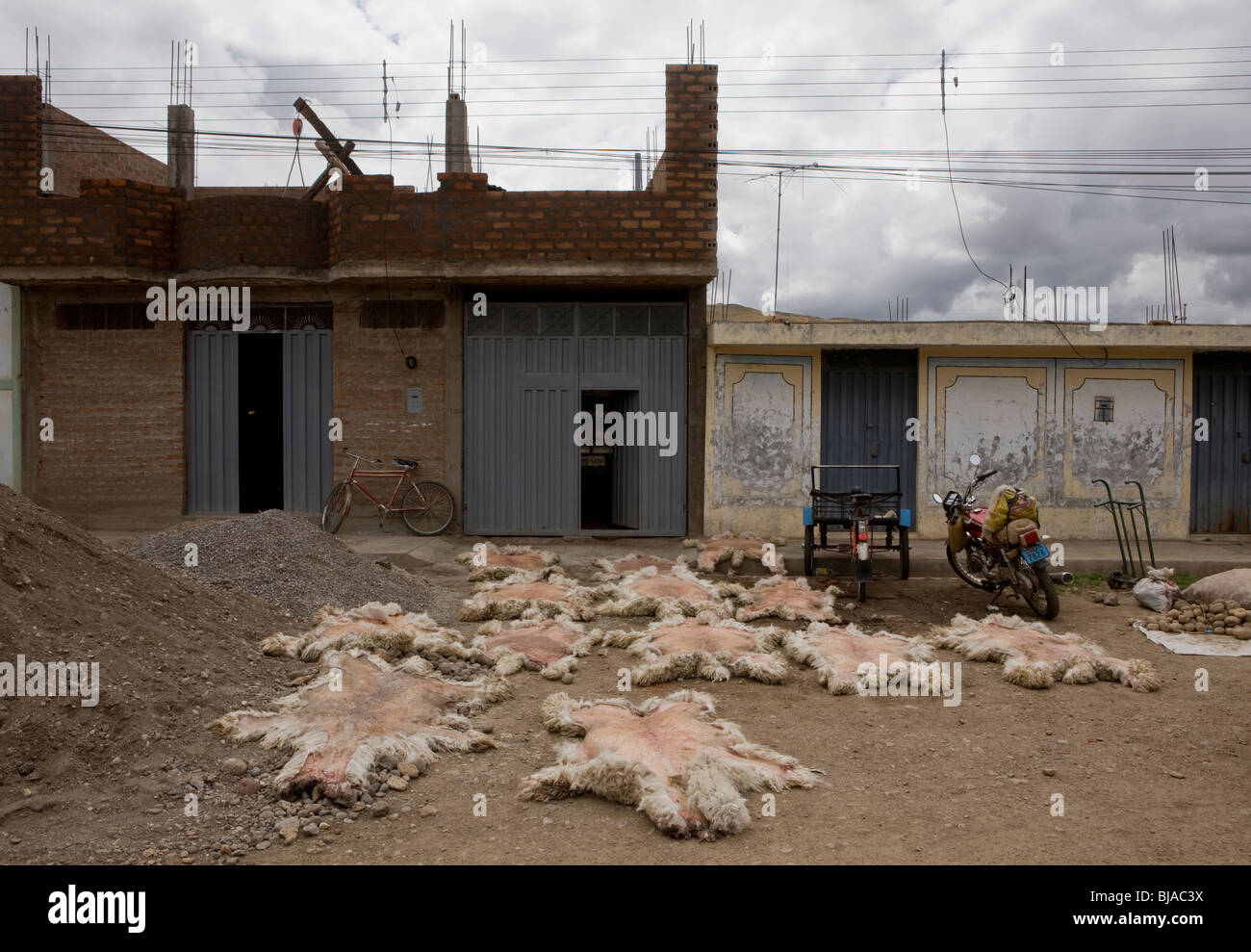 Llama skins lied out to dry in peruvian village - Stock Image