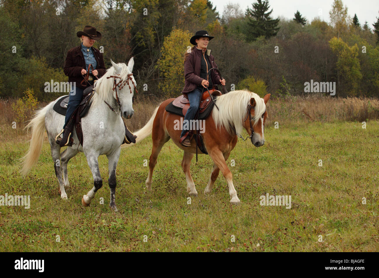Western Horse Riding Dressage High Resolution Stock Photography And Images Alamy