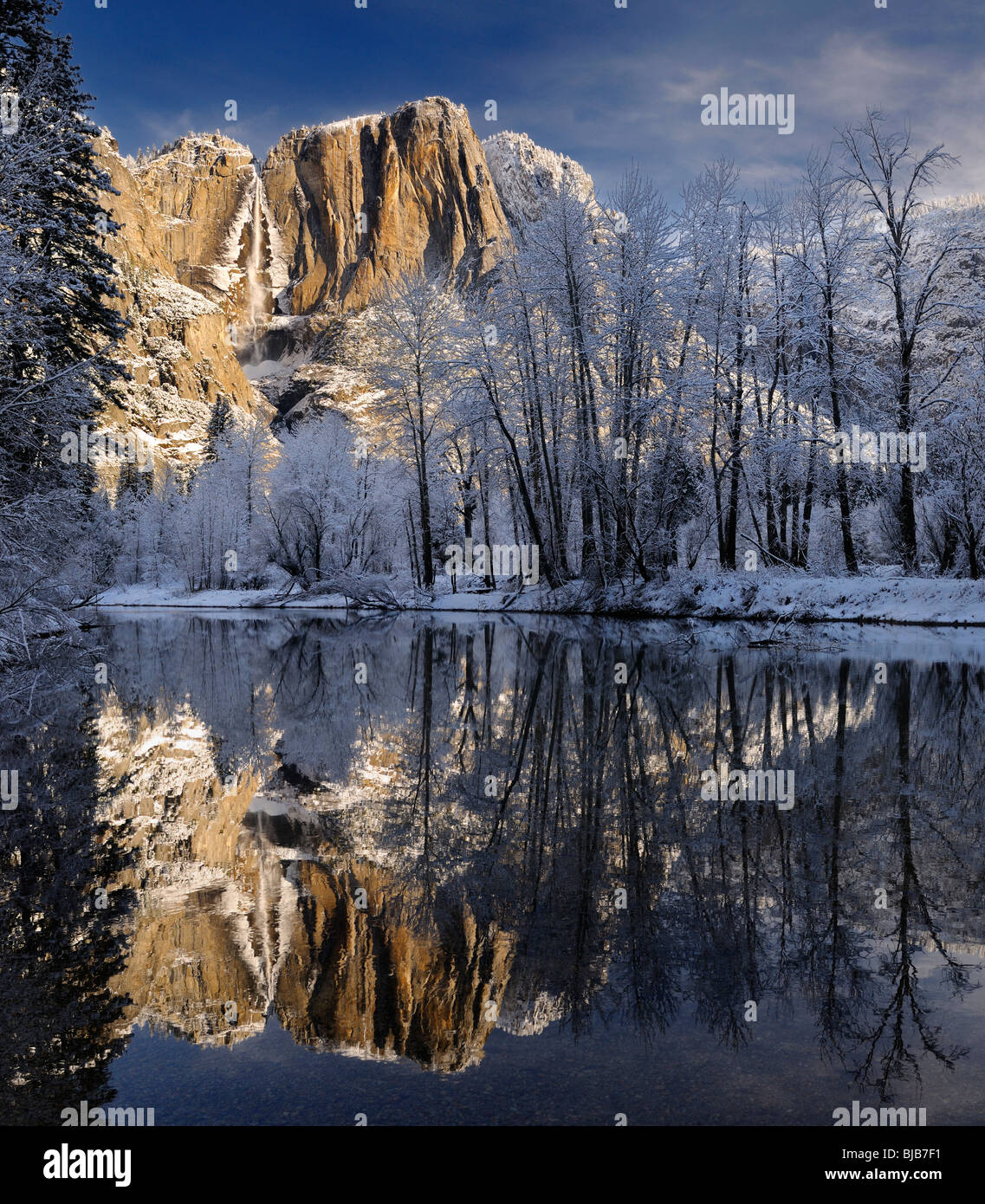 Snow covered trees and Yosemite Point and the Upper Fall reflected in the Merced River in winter Yosemite National - Stock Image