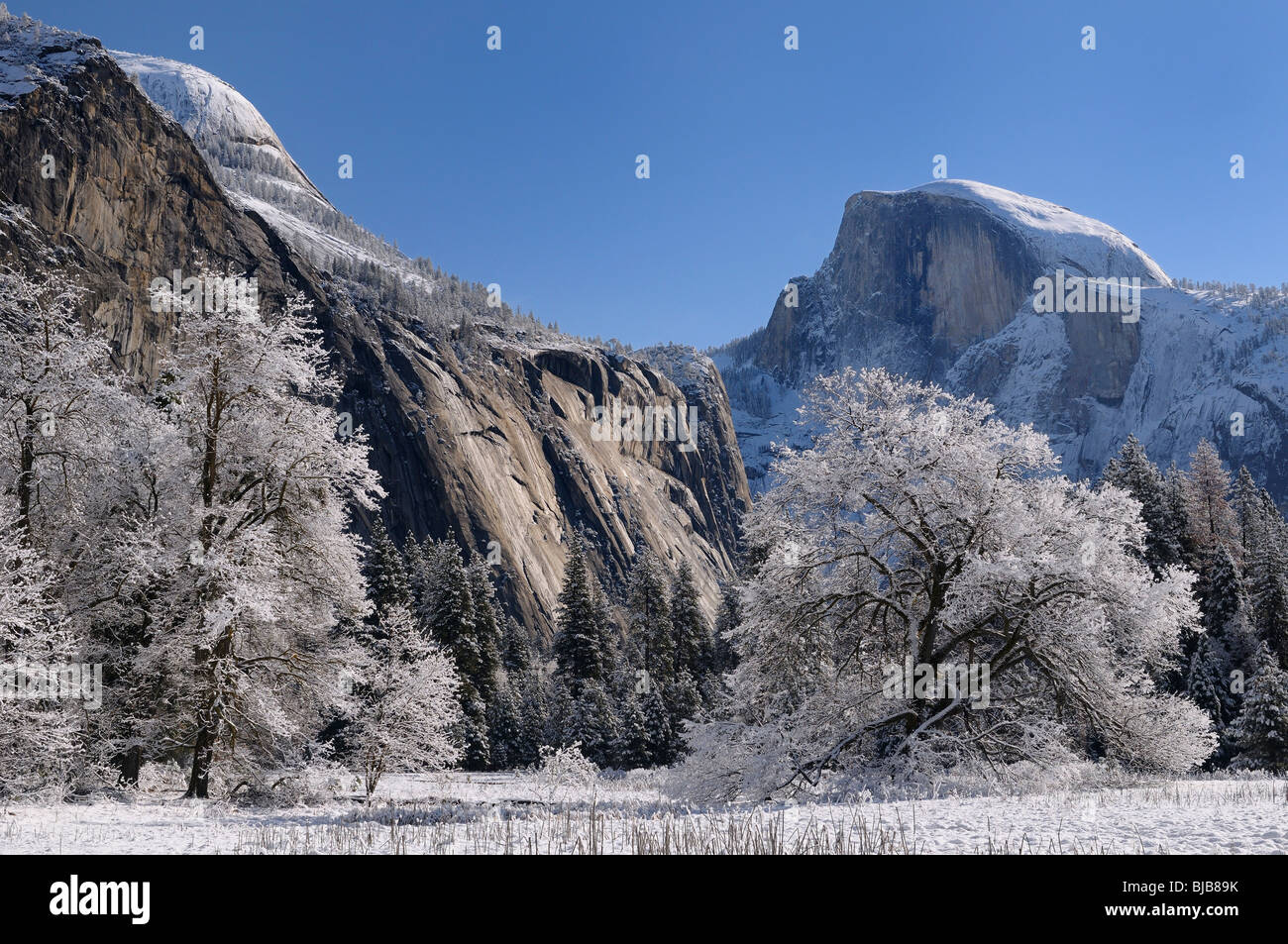 Clear winter day after a snowfall in Cooks Meadow with snow covered trees North Dome and Half dome peaks Yosemite - Stock Image