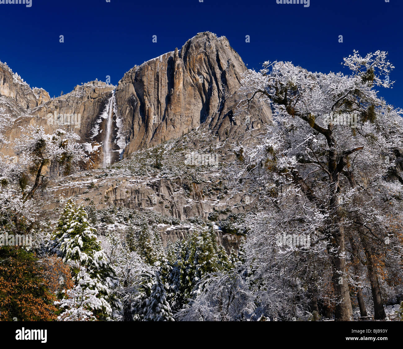 Snow covered trees in the valley of Yosemite National Park with the Upper Yosemite Fall waterfalls in winter USA - Stock Image