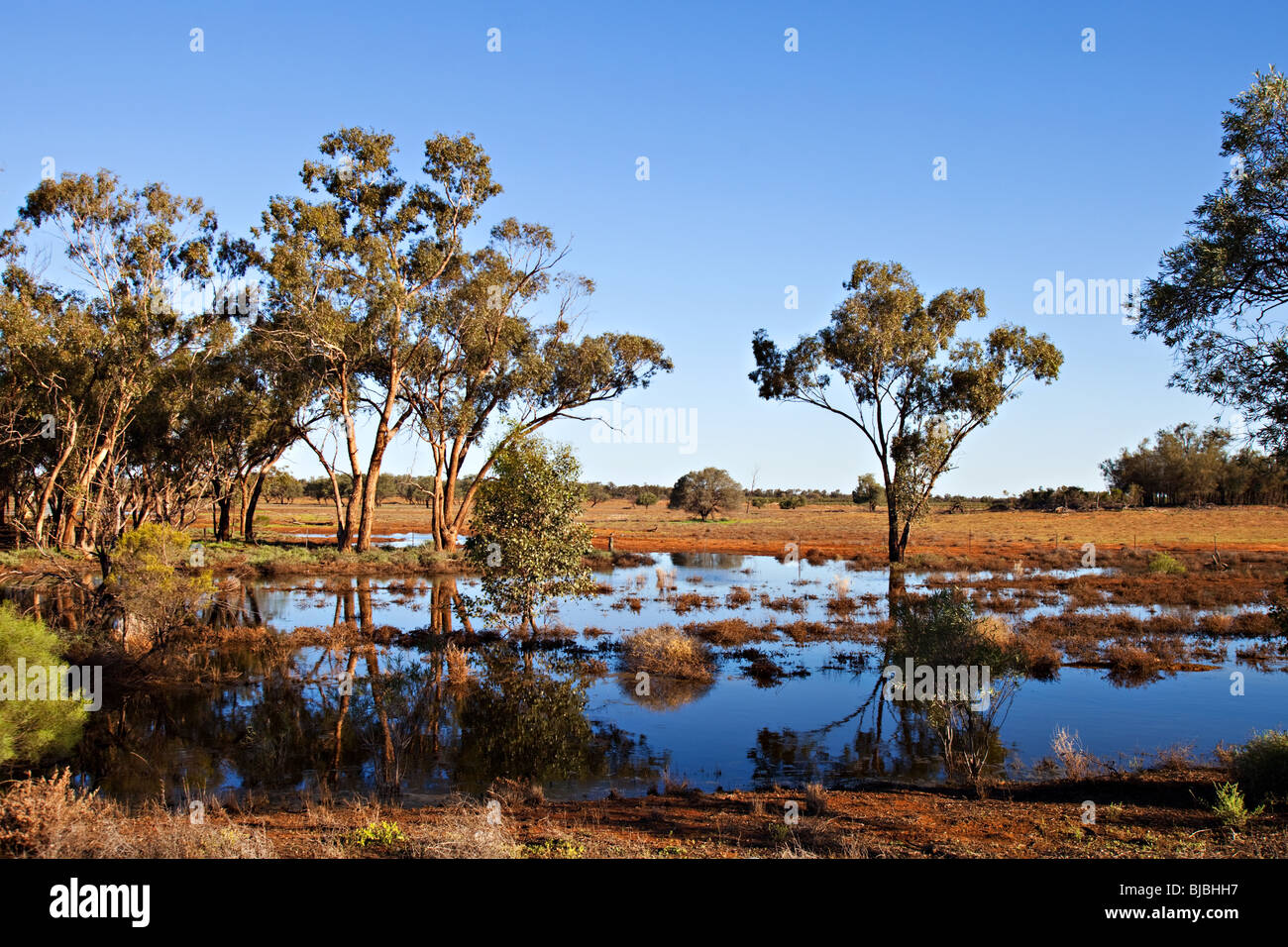 Water in Australian outback after floods, NSW Australia - Stock Image