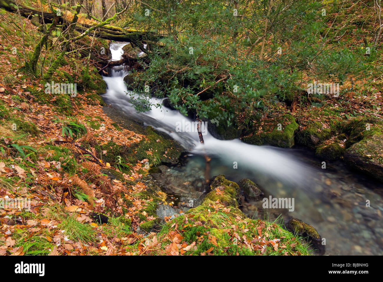 Small Stream Near Derwent Water (Loe Howes Wood) in the Lake District - Stock Image