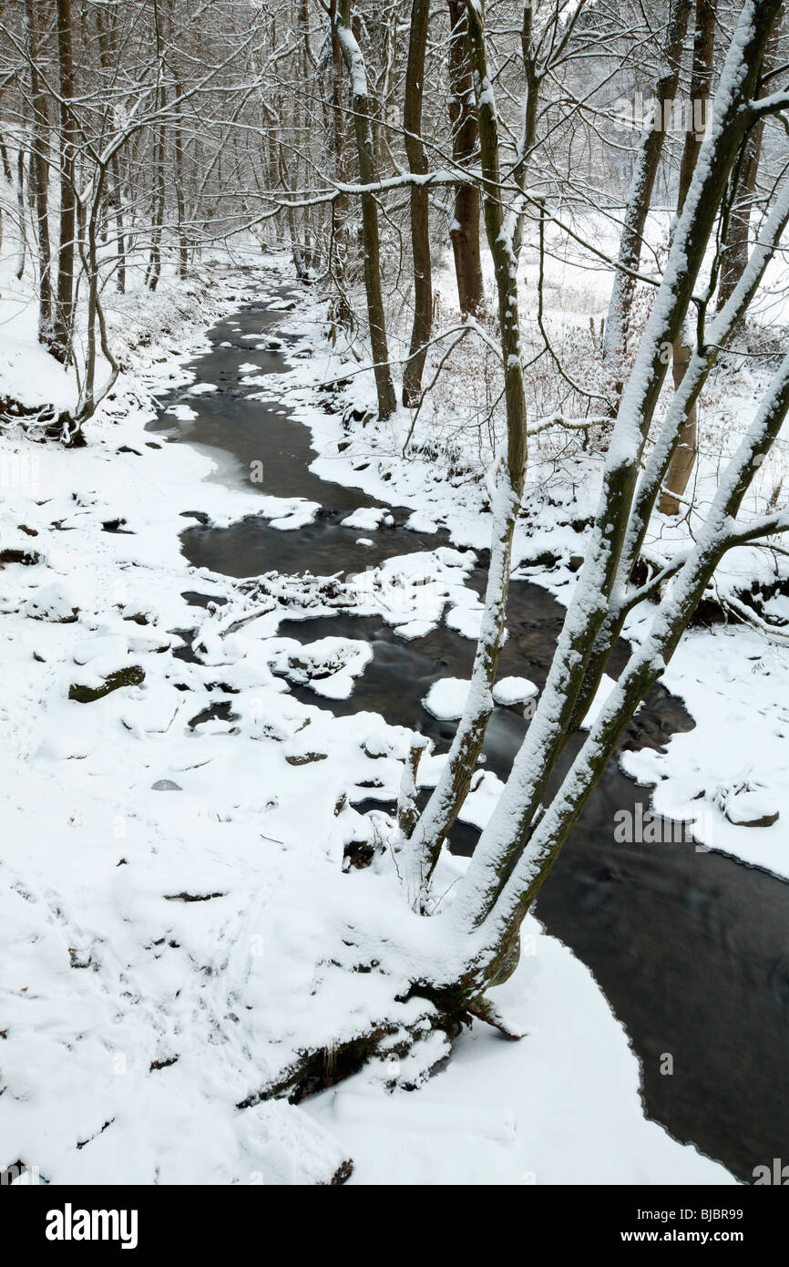 Hill stream in Winter, Bramwald nature park, Lower Saxony, Germany - Stock Image