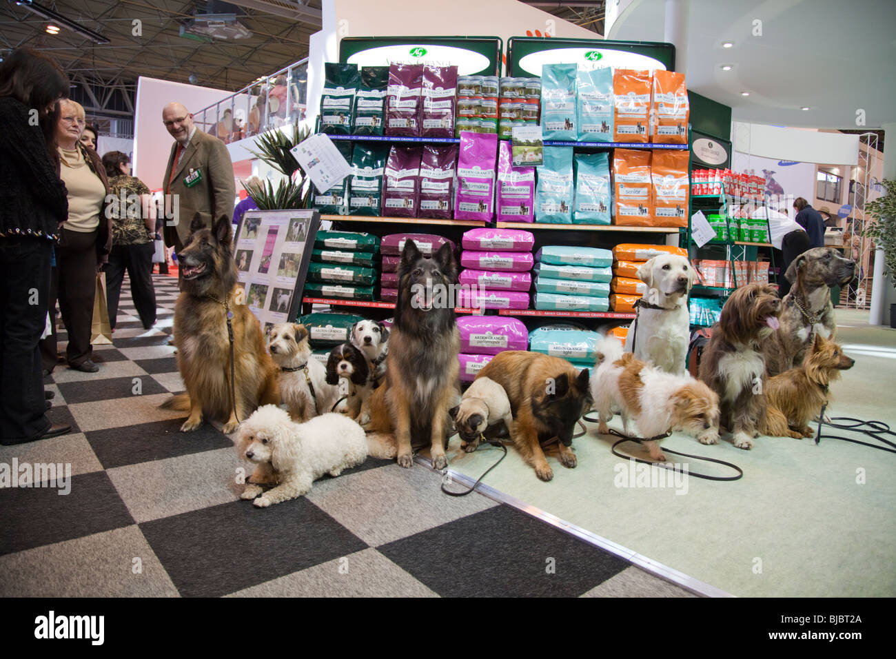 Crufts, Birmingham NEC, 2010. Dogs getting ready for the show, Pedigree pets for best in show - Stock Image