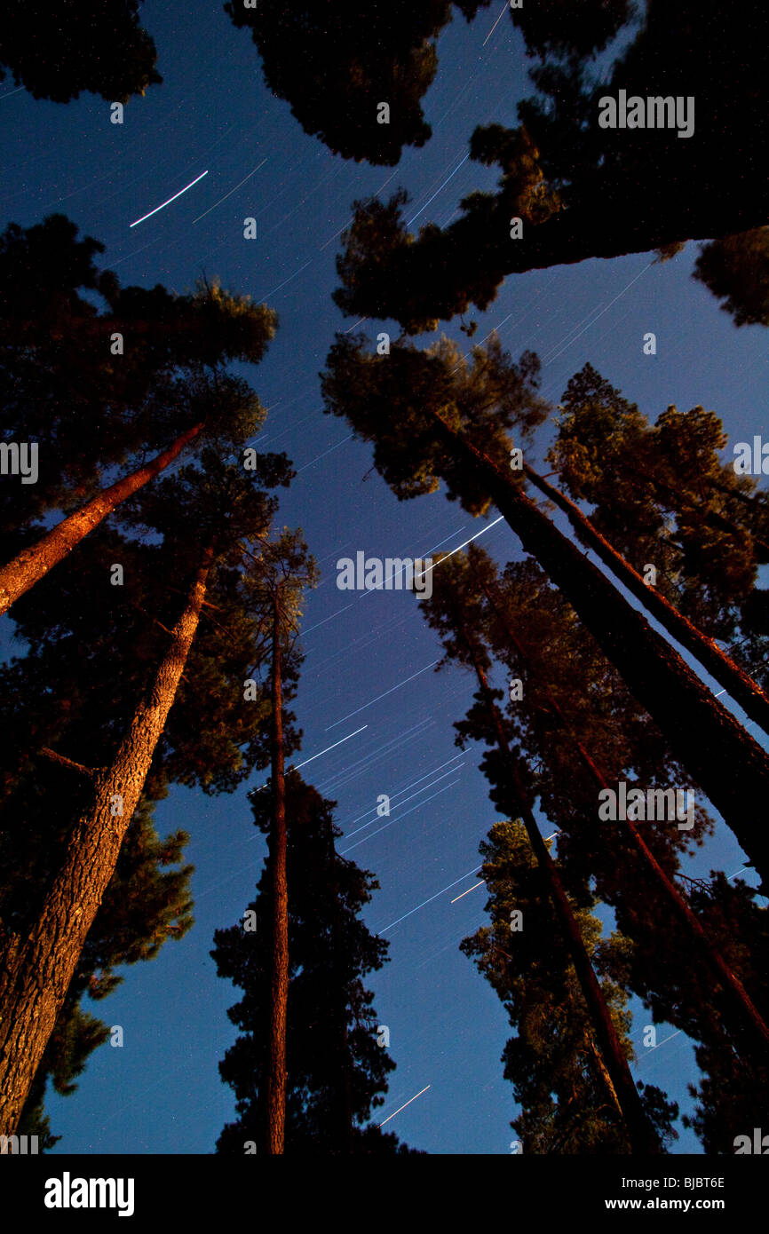 stars on long exposure against the sky at night in the middle of forest, Grampians National Park , Victoria, Australia - Stock Image