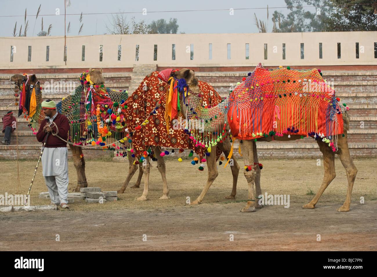 Muktsar Moktsar Punjab horse fair India Indian Stock Photo
