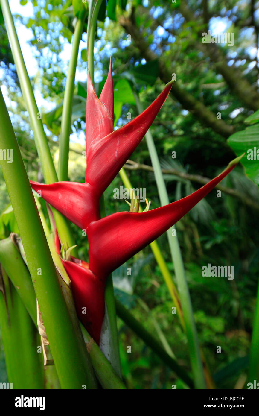 Lyon Arboreteum, Manoa Valley, Honolulu, Oahu, Hawaii - Stock Image