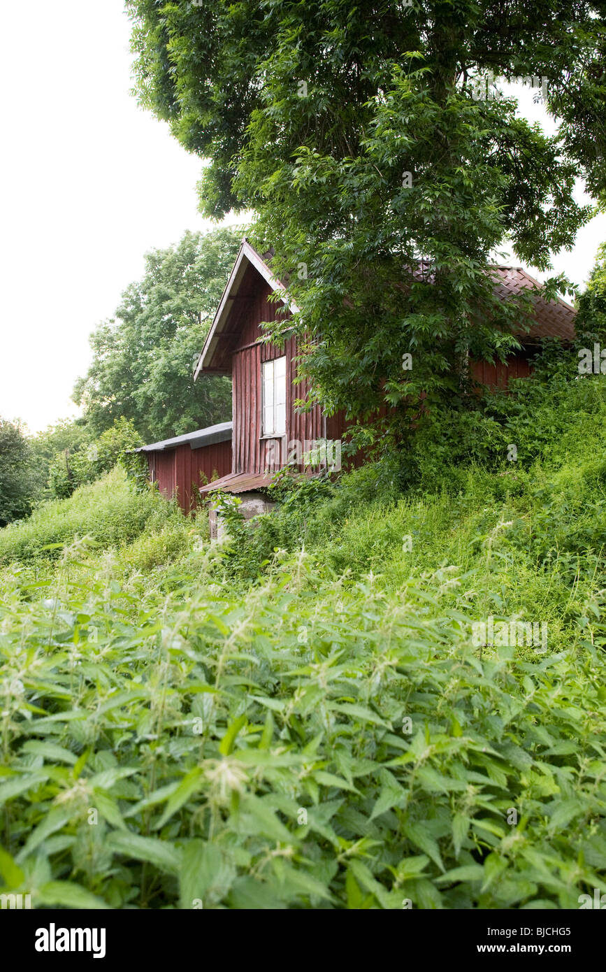 Overgrown cottage in the country - Stock Image