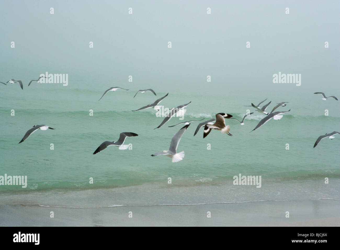 Gulls flying over beach - Stock Image