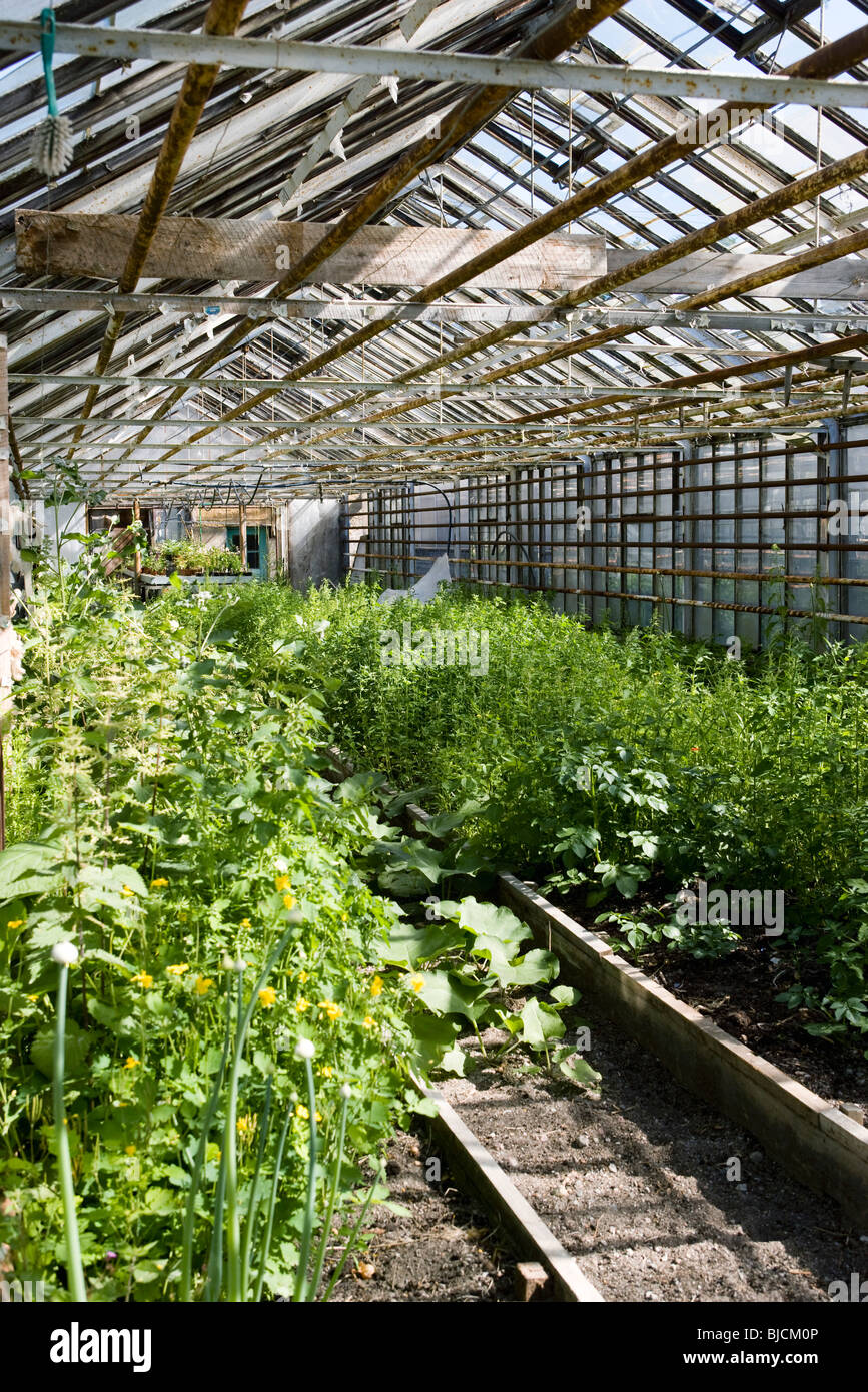 Greenhouse agriculture - Stock Image