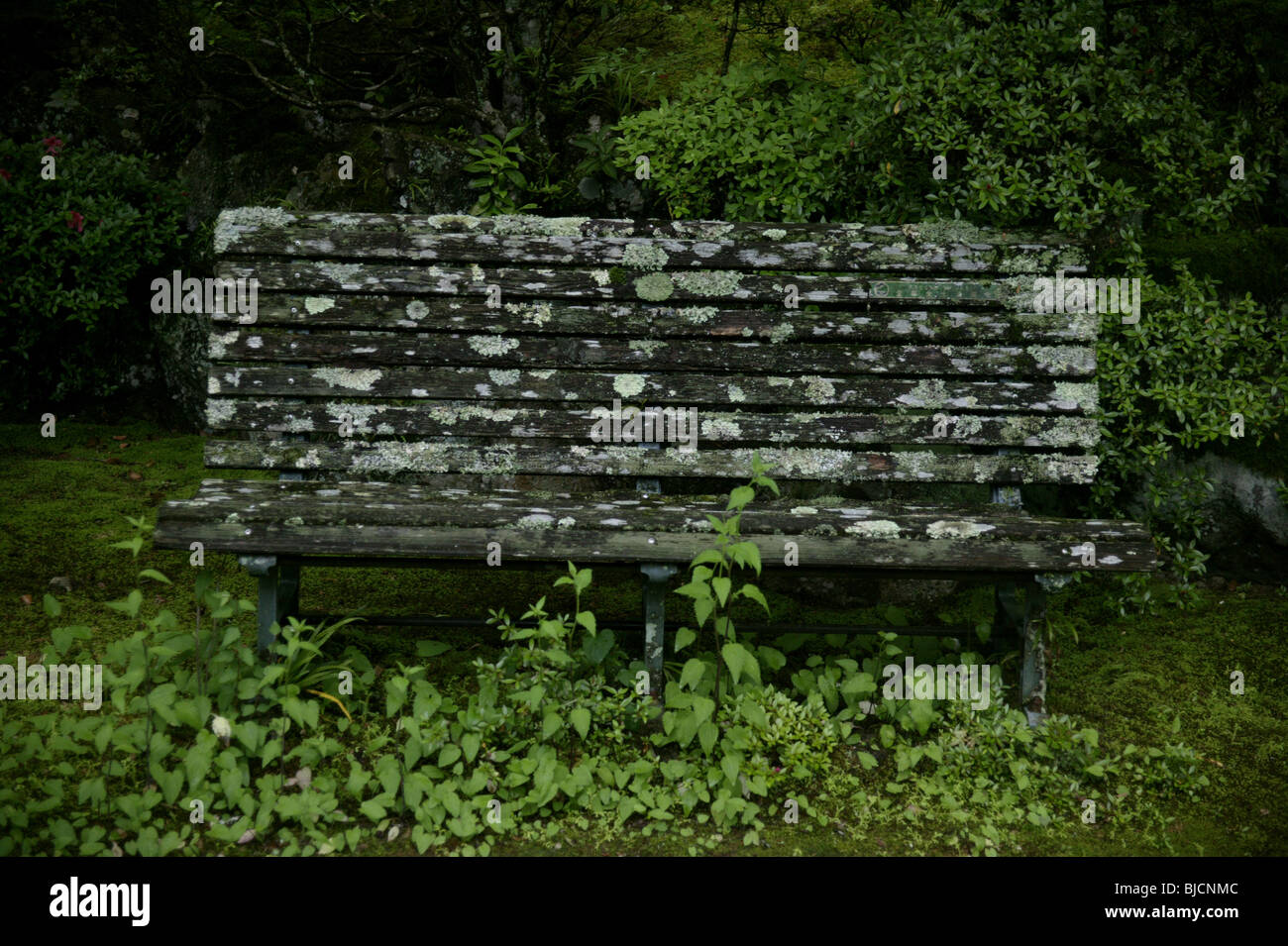 old bench - Stock Image