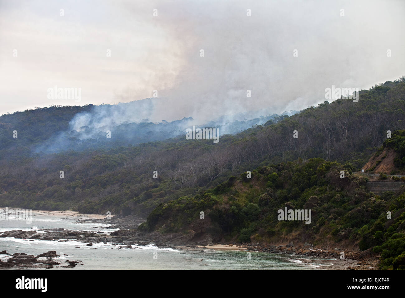 Eucalyptus forest fire in Great Otway National Park, Victoria, Australia - Stock Image
