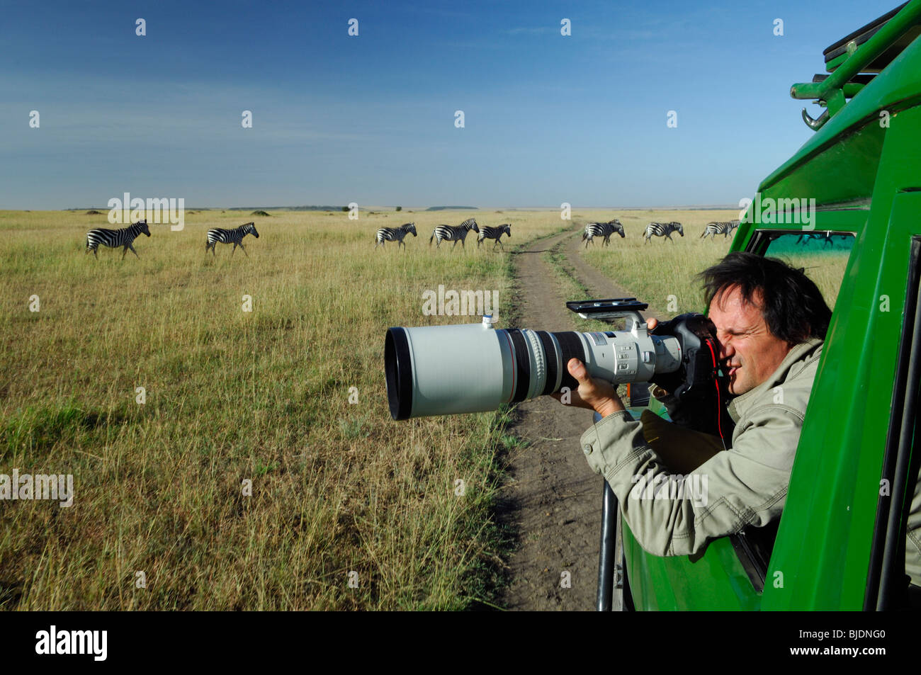 Tony Crocetta a professional french wildlife photographer shooting with tele lens zebras. Kenya Masai Mara NP - Stock Image