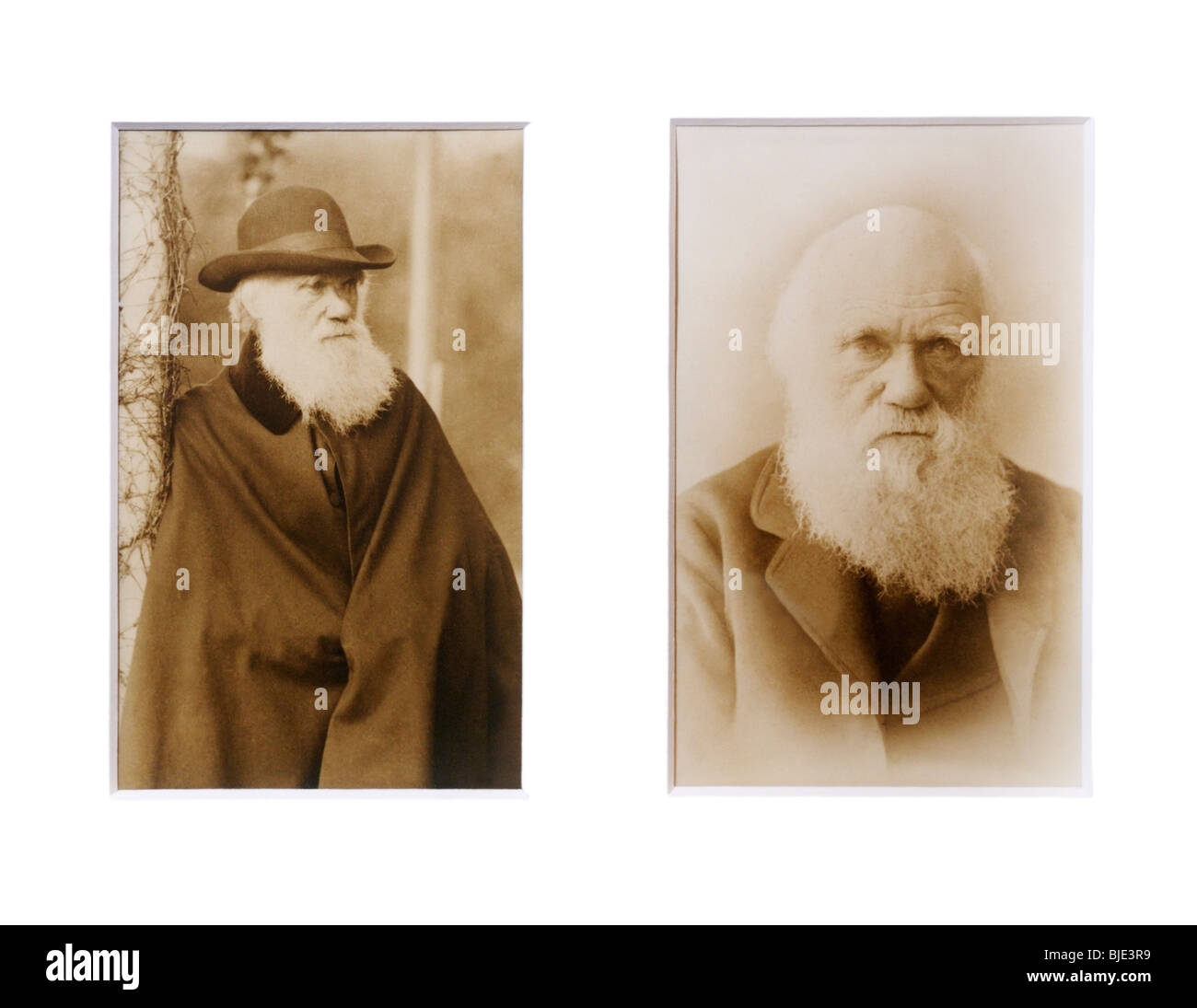 Charles Darwin portraits, in his later years - Stock Image