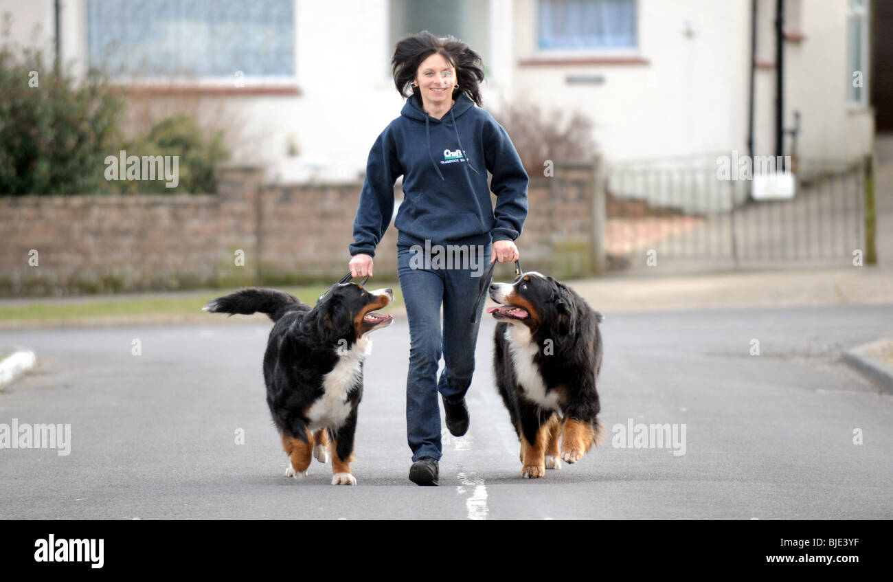 Sandy Rothery from Sompting in Sussex with two of her prize winning Bernese Mountain Dogs which had just won at - Stock Image