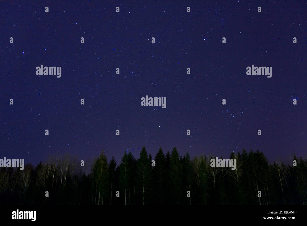 Stars on a clear, dark blue, night sky. Silhuette of woods in the bottom. - Stock Image