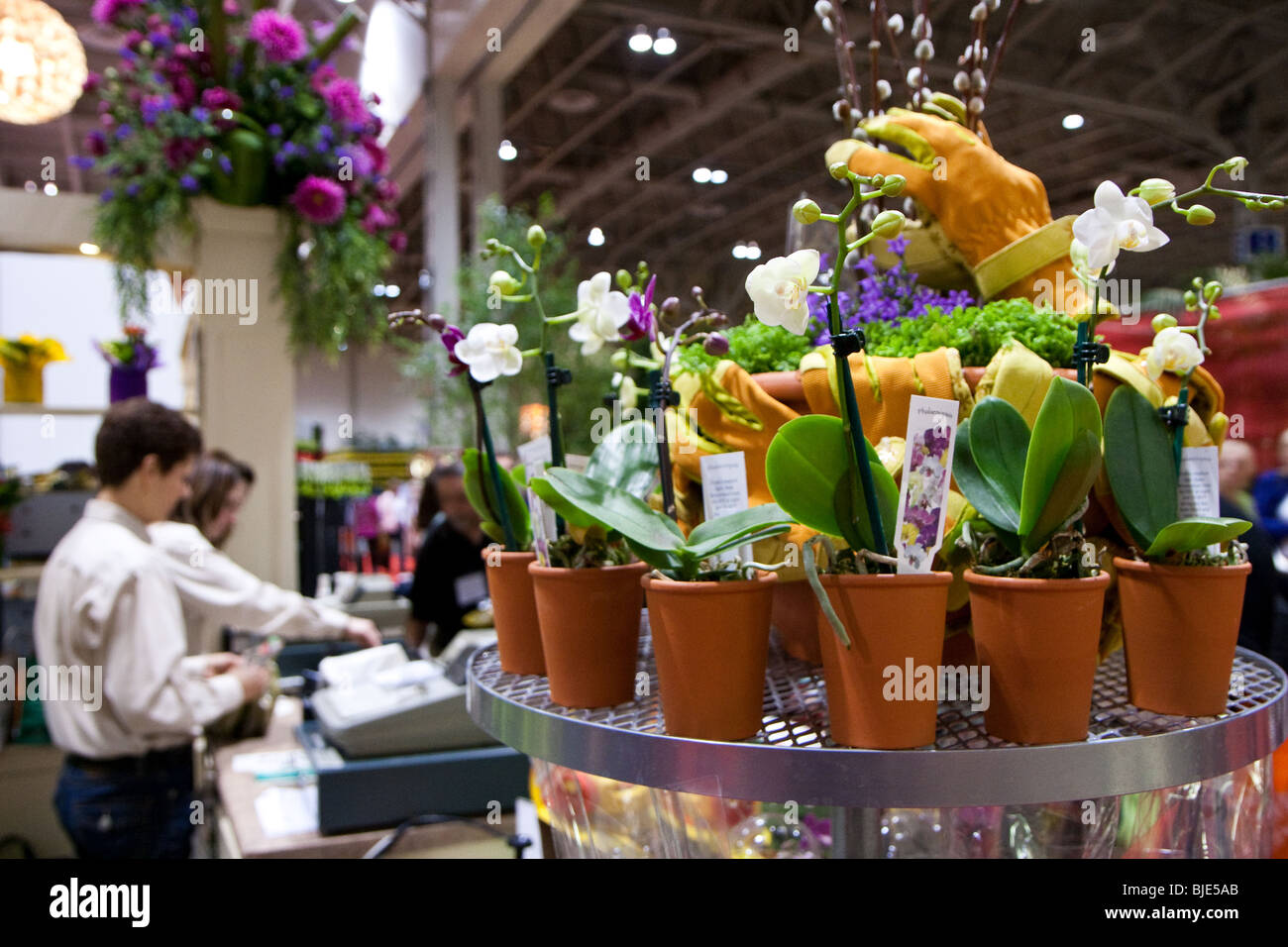 Small Orchid plants on sale at the Canada Blooms gardening and flower show - Stock Image