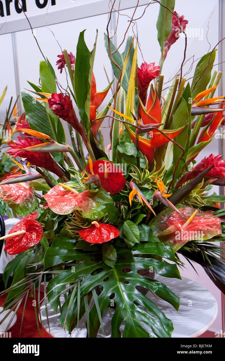 Red Anthurium Flower Arrangement Stock Photos Red Anthurium Flower