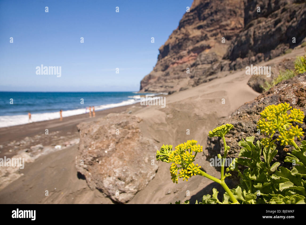 Native flora on the remote and unspoilt Gui Gui Beach on the West Coast of Gran Canaria - Stock Image