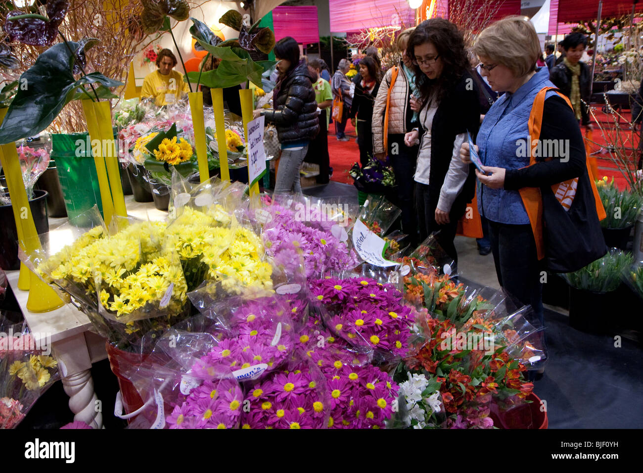 Canada bloom buyers event flower garden shoppers show gerbera yellow purple red white - Stock Image