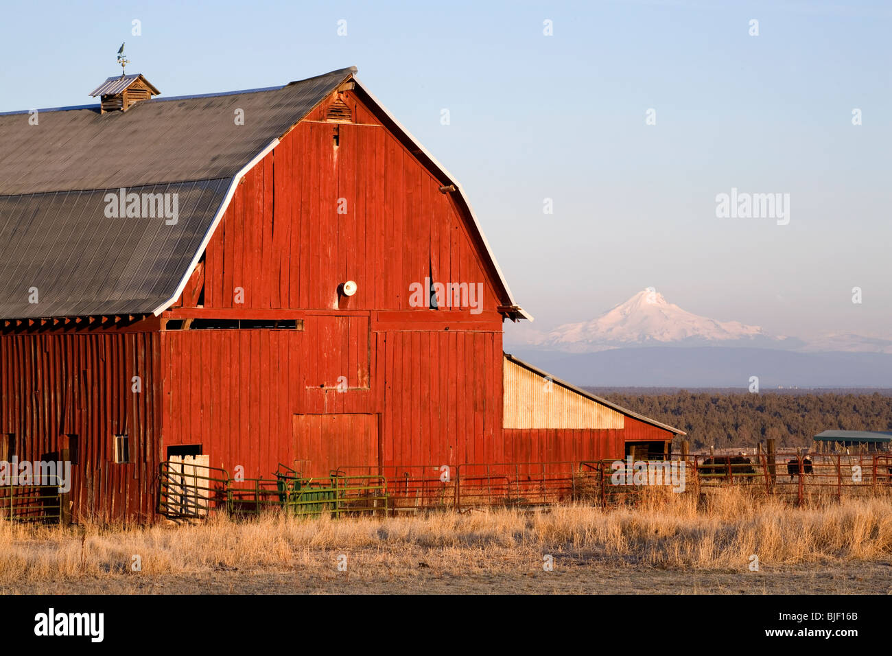 An old red barn with Mount Jefferson in the background, in central Oregon - Stock Image