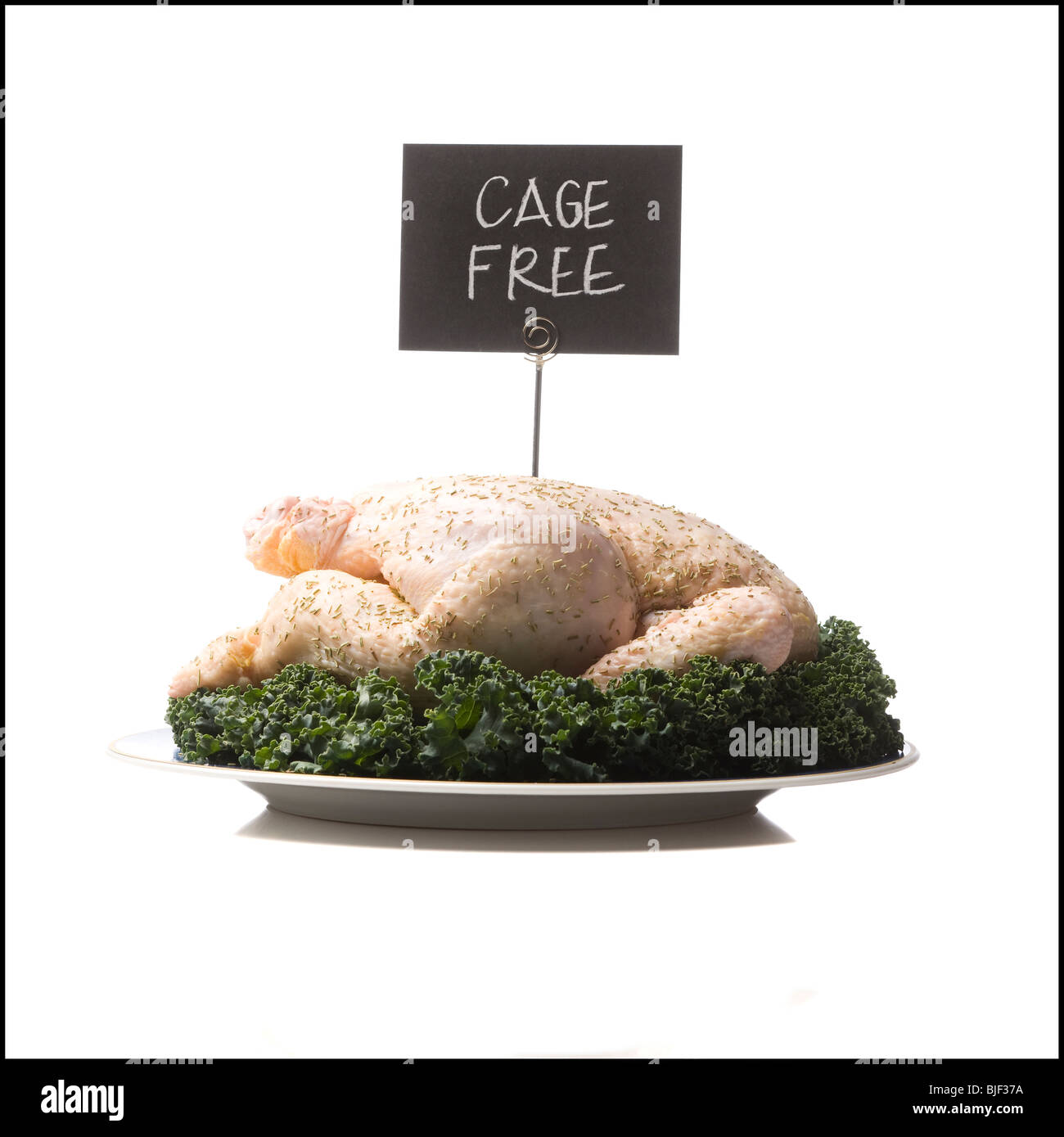 cage free chicken - Stock Image
