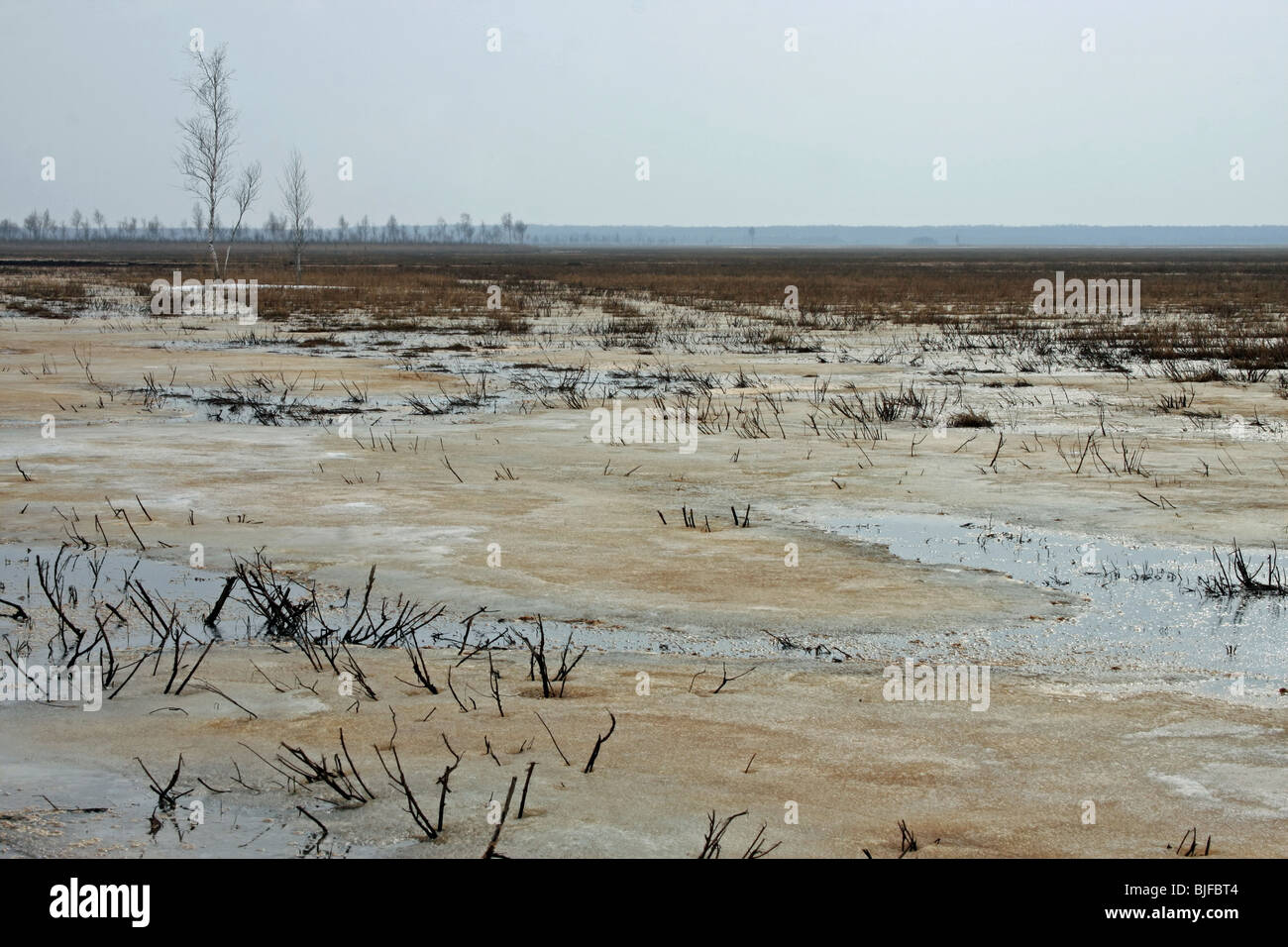 spreads of Biebrza river, marches in east Poland - Stock Image