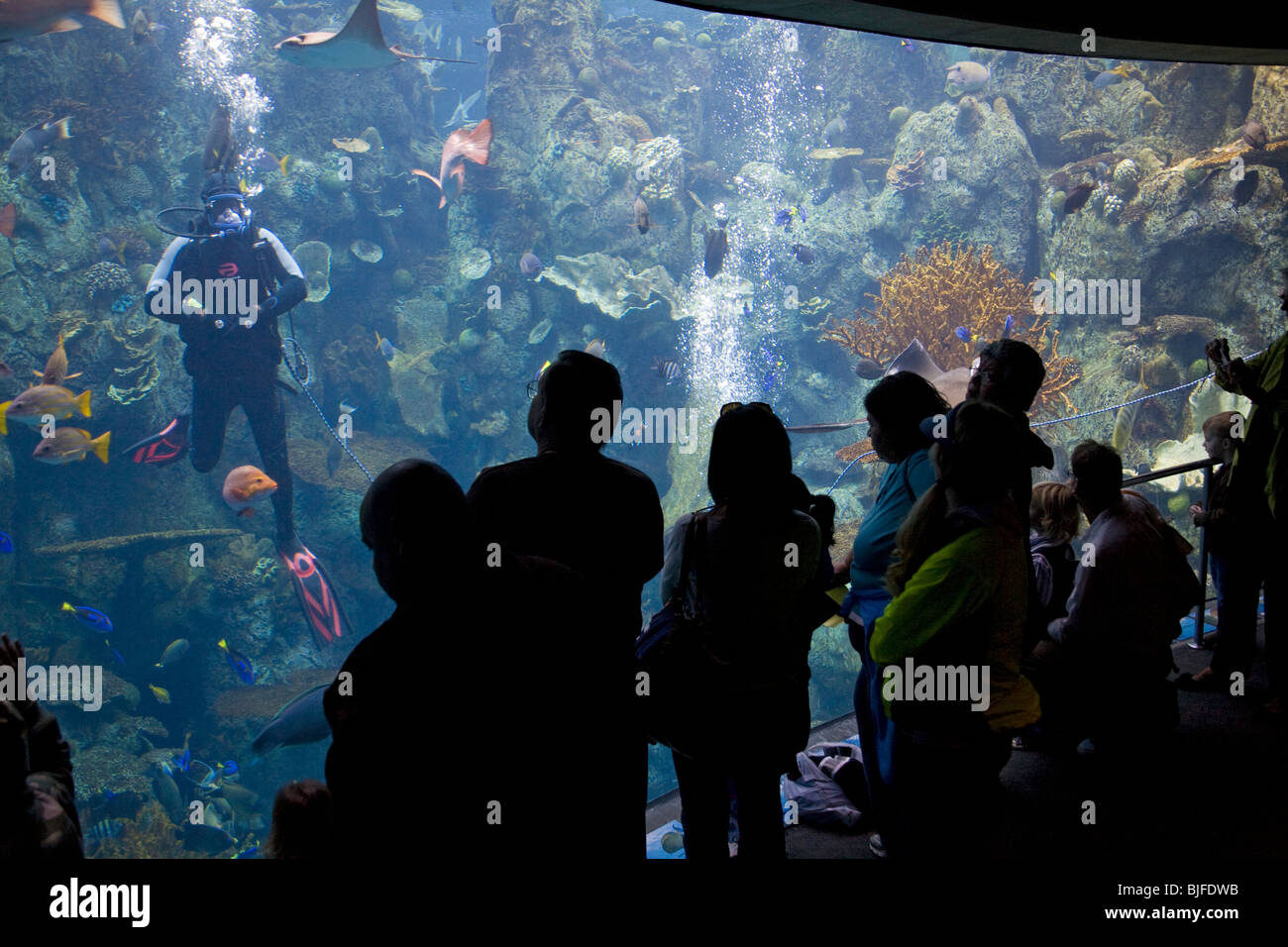 Tropical Pacific Gallery, Aquarium of the Pacific, Long Beach, Los Angeles County, California, USA - Stock Image
