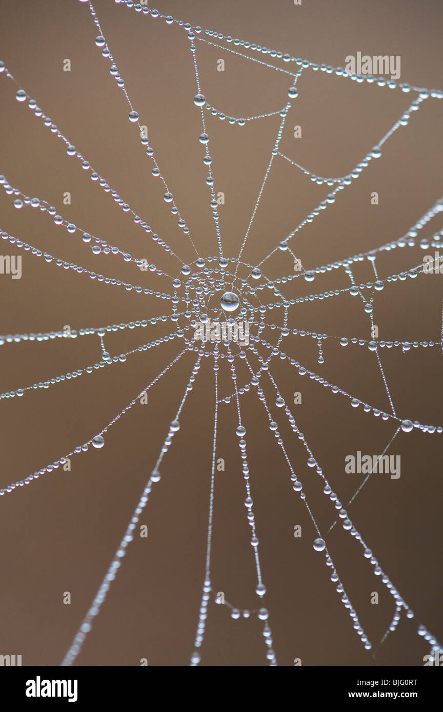 Water drops on a spiders web. Numbers in nature. Here you can see the number nine - Stock Image