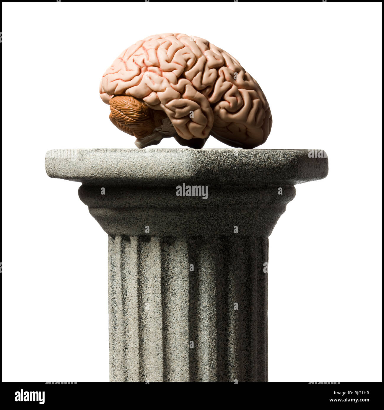 brain on a pedestal - Stock Image
