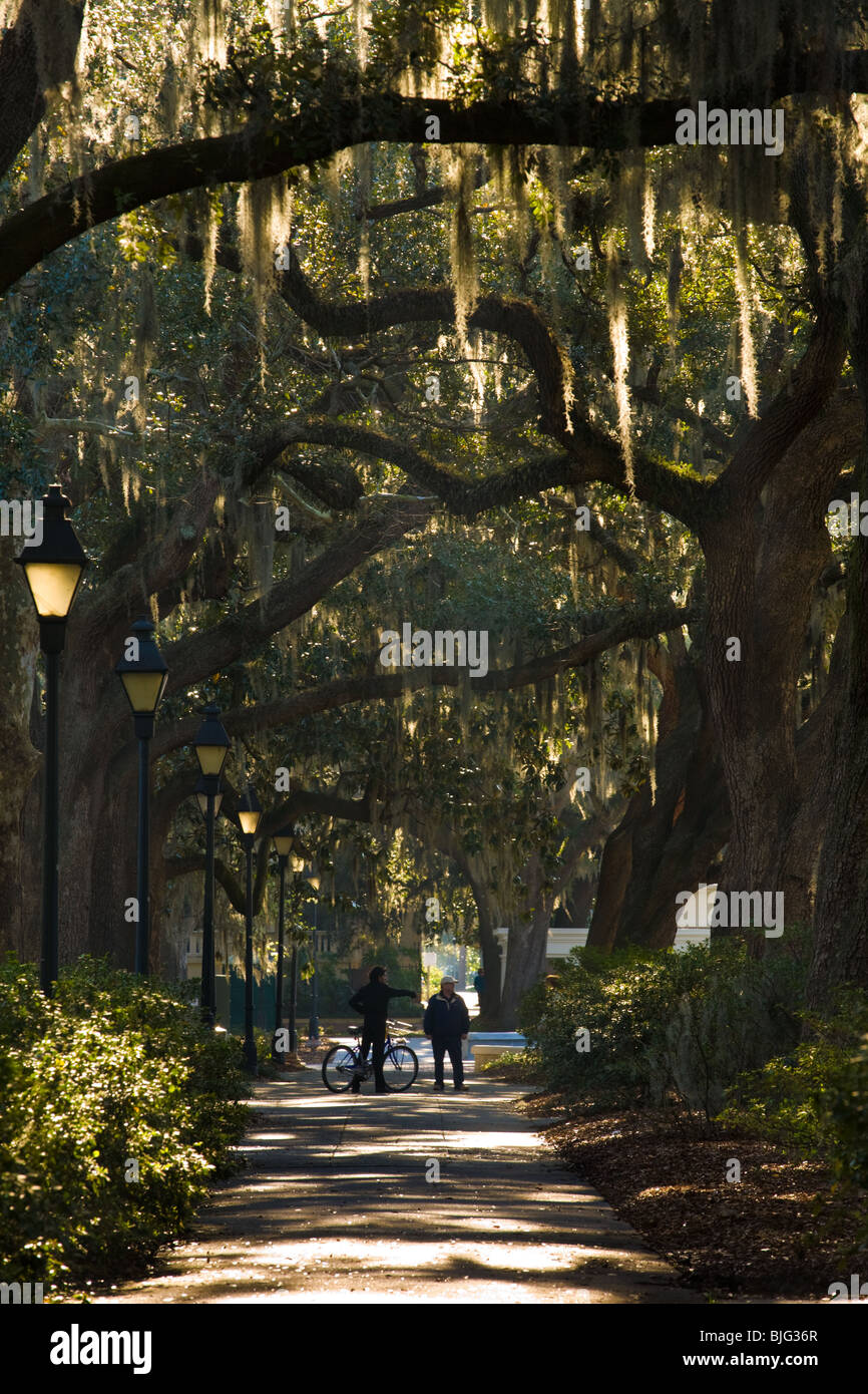 Live oaks and Spanish moss at Forsyth Park in Savannah, Georgia - Stock Image