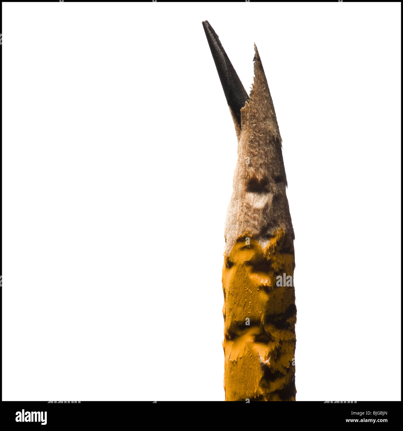 chewed on pencil - Stock Image