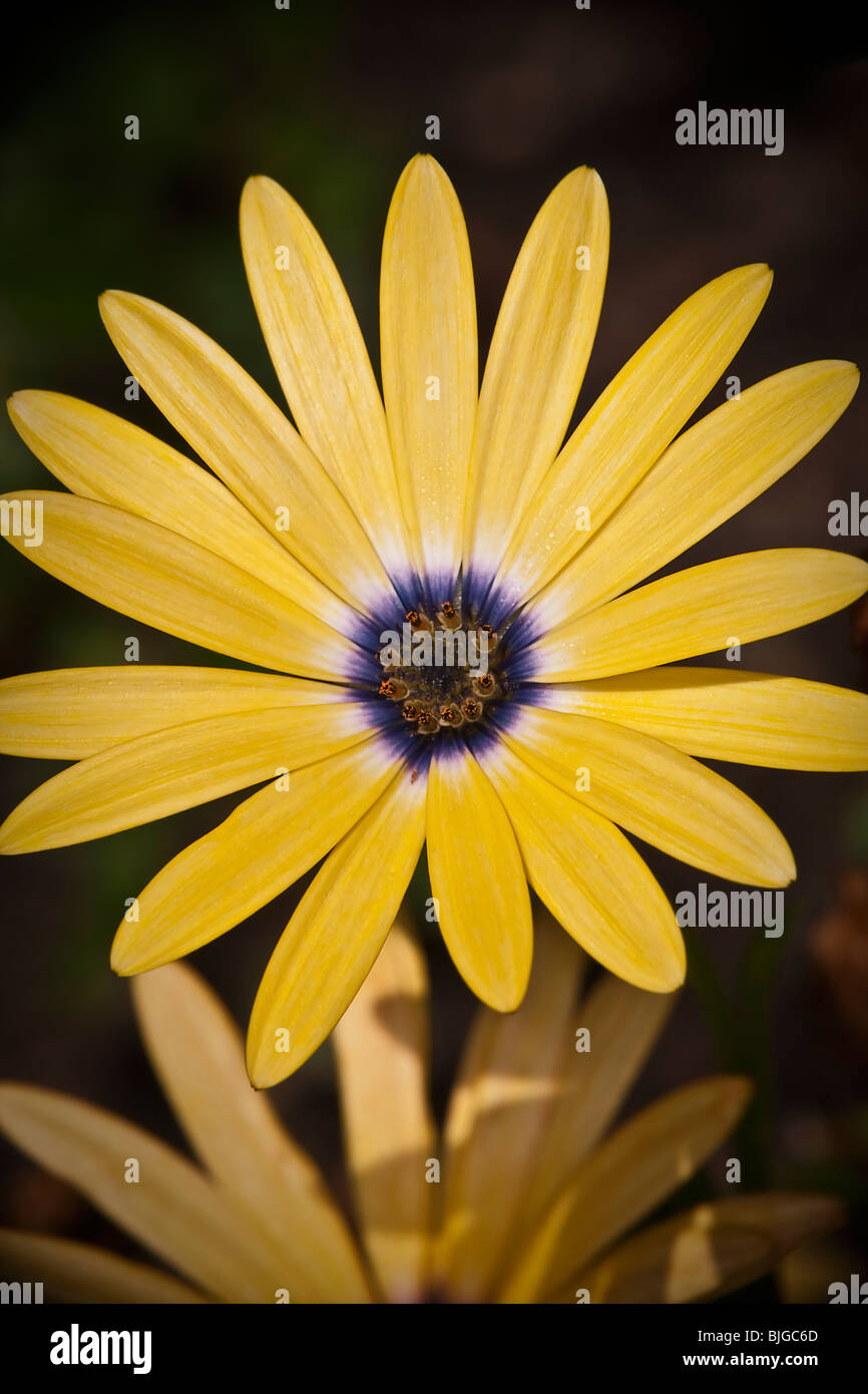 Pollinating flower - Stock Image