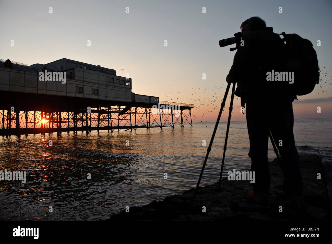 Professional Photographer Jerry Moore photographing starlings roosting at sunset. Aberystwyth pier, west wales UK - Stock Image