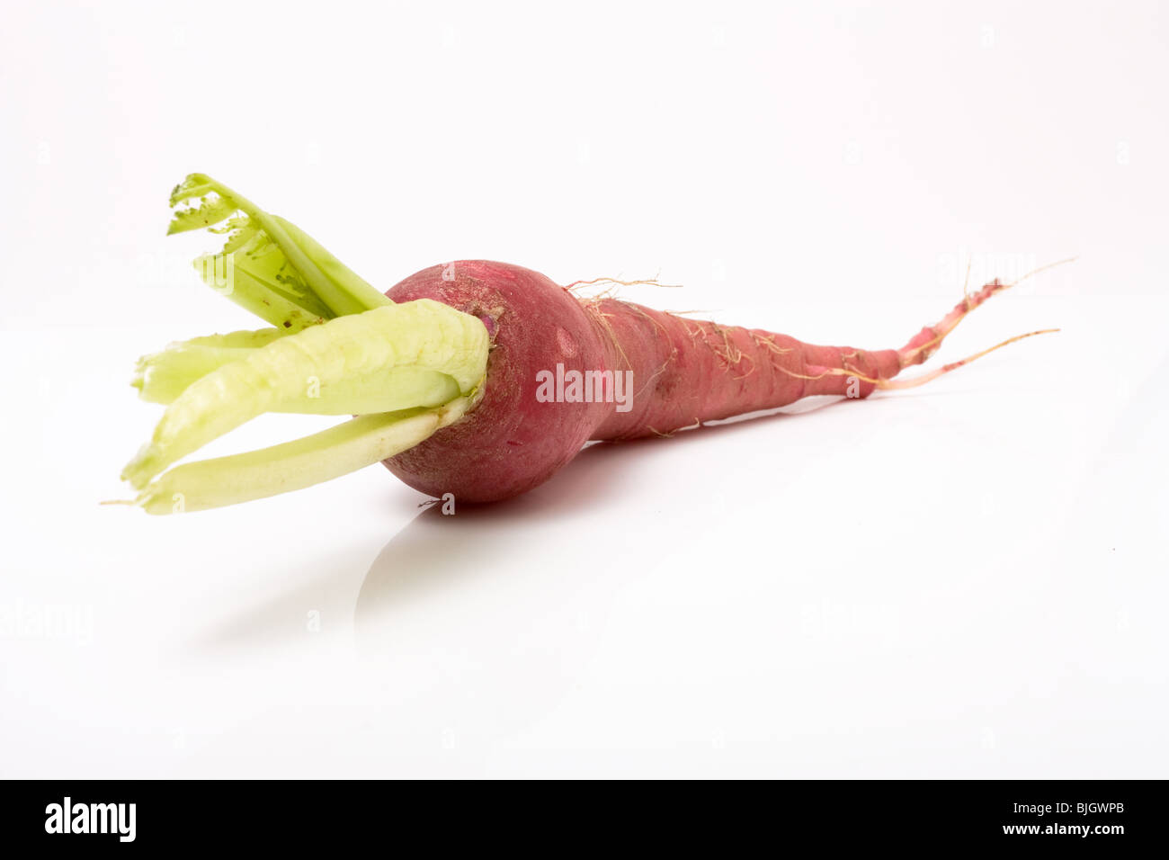 Red mooli also known as Japanese radish isolated on white background. - Stock Image