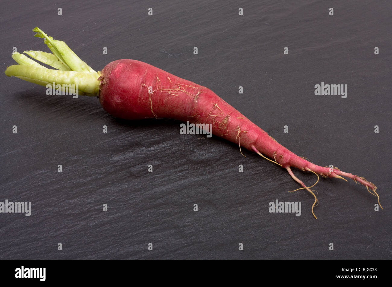Vibrant Red mooli also known as Japanese radish on dark slate background. - Stock Image