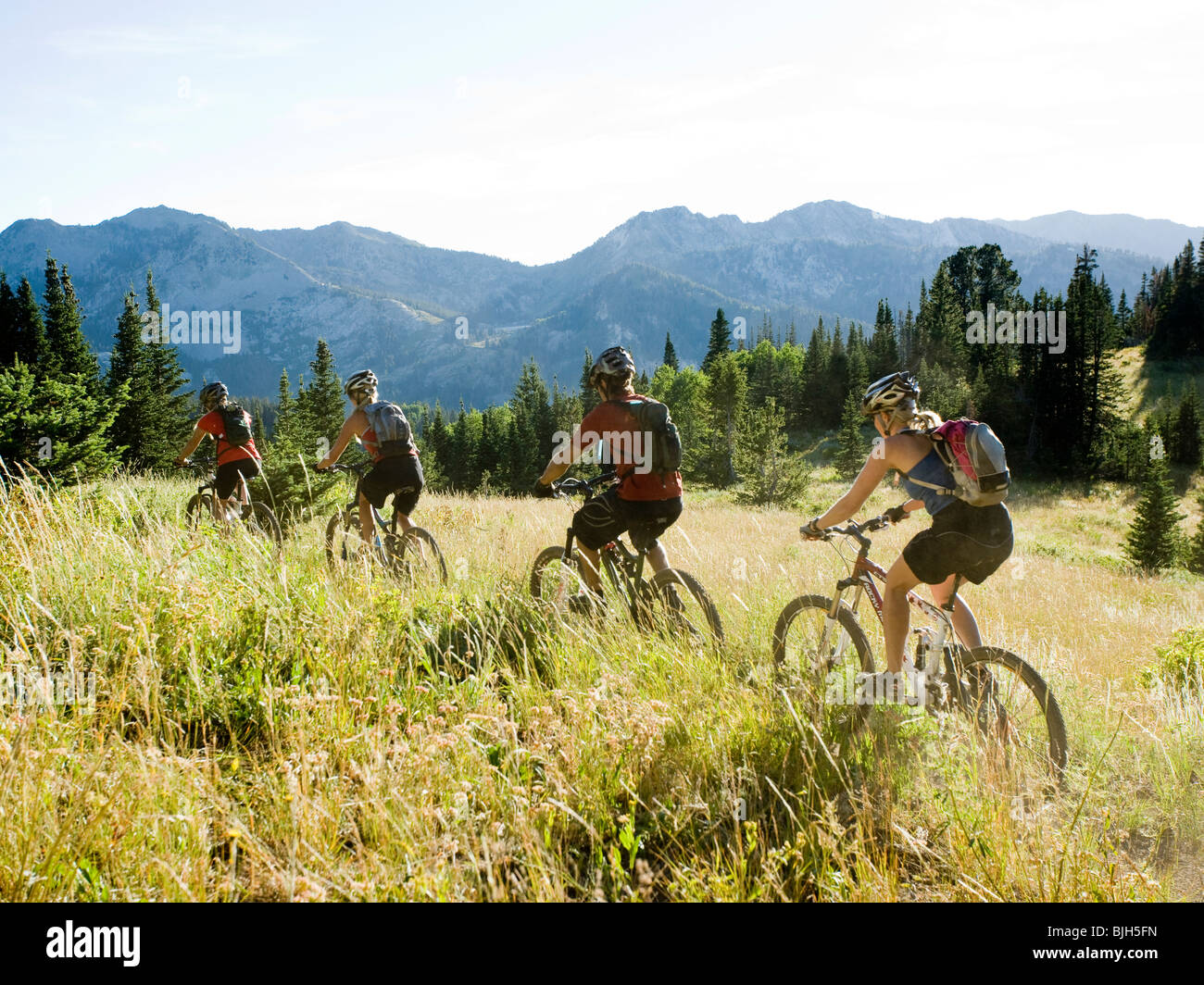 mountain bikers riding down a trail - Stock Image