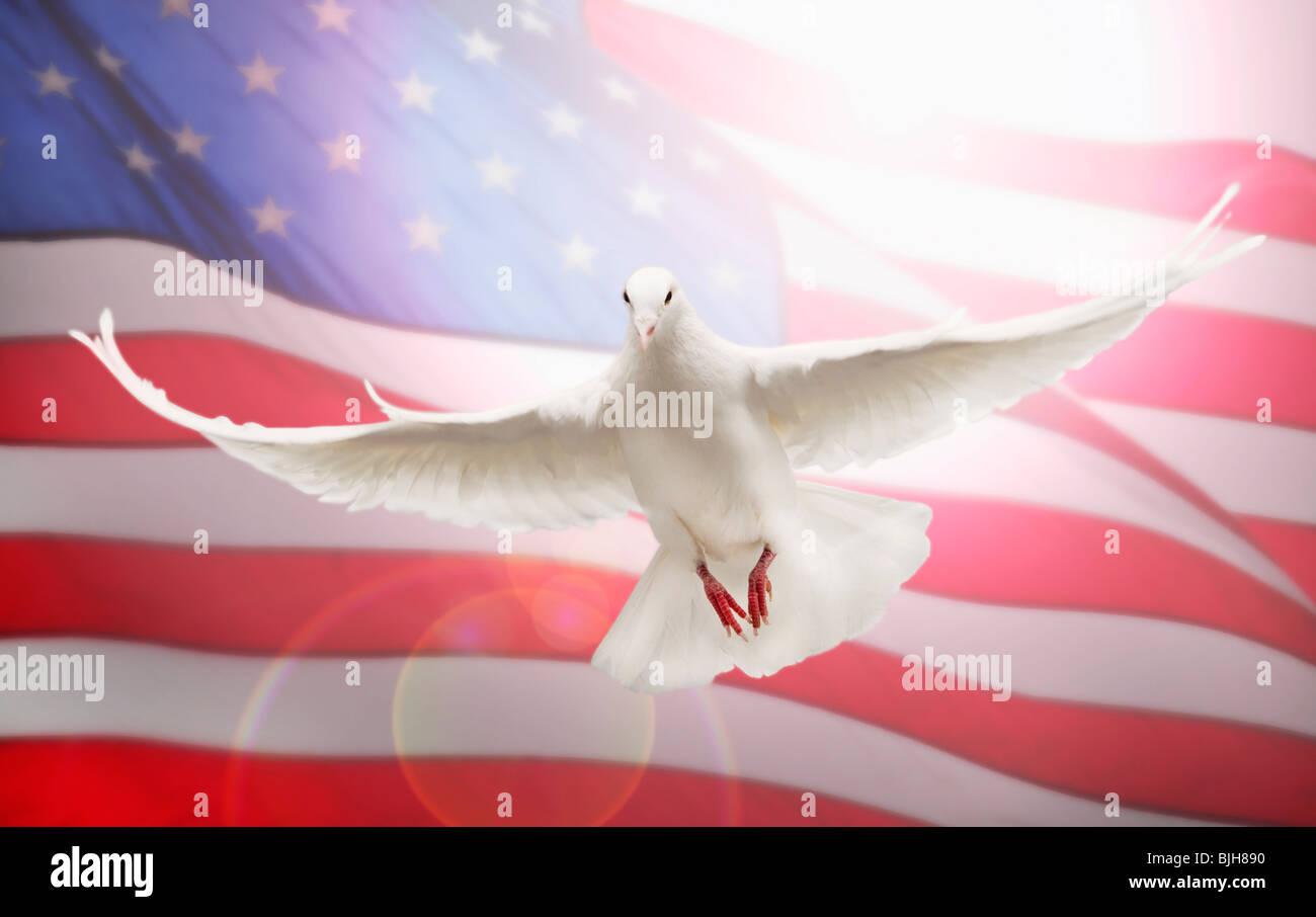 1000 Free Dove amp Bird Images  Pixabay